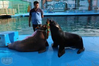元宝山区地区马戏团出租出租马戏团出租海狮企鹅展览马戏团演出