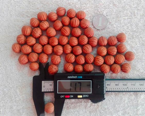 粒径10-45mm美国猴头核桃热销