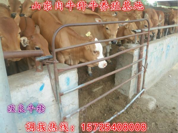 山西�西�S牛�B殖���