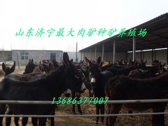 供应山东毛驴养殖场