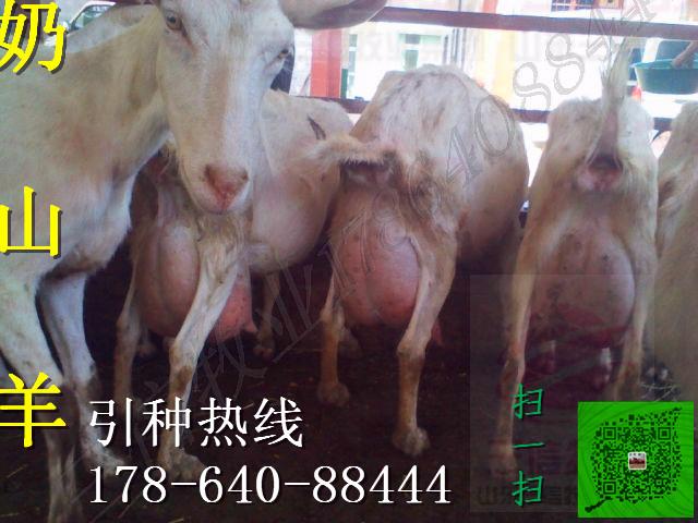 宜宾市筠连县现在肉牛犊价格