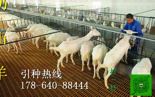 蓟县全境肉牛养殖场