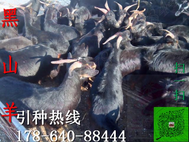 抚州市乐安县现在肉牛犊价格