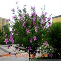 仿真木槿花树 跨界 仿真木槿花树制作 3米 假树仿真植物 大型仿真樱花木槿花树