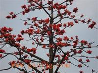 仿真木棉花树 跨界 仿真木棉花树制作 3米 假树仿真植物 大型仿真樱花木棉花树