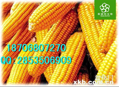 玉米提取物价格、优质玉米粉直销