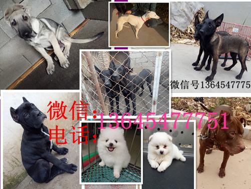 猎犬养殖长兴县罗威纳幼崽多少钱一个