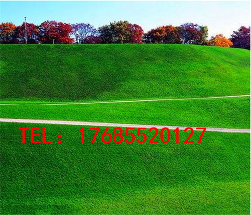 十一人制足球场人工草坪供应万载县