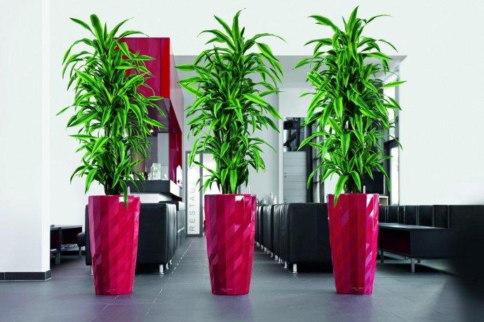 立体绿化、专业的绿植软装供应商就在广州