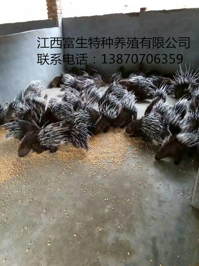 江西富生特种养殖青青草成人在线青青草网站豪猪宴荣获客家美食特金奖