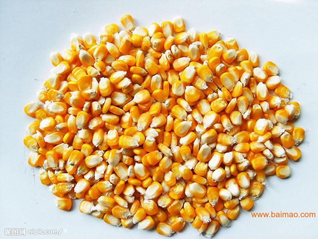 广大饲料长期求购玉米高粱大豆