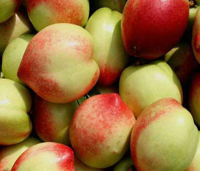 油桃树批发