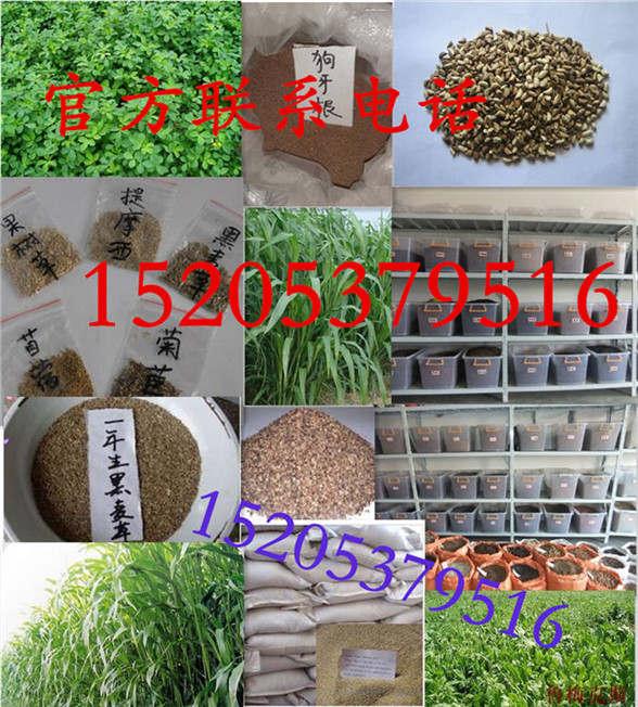 山东省滨州市护坡草种植办法