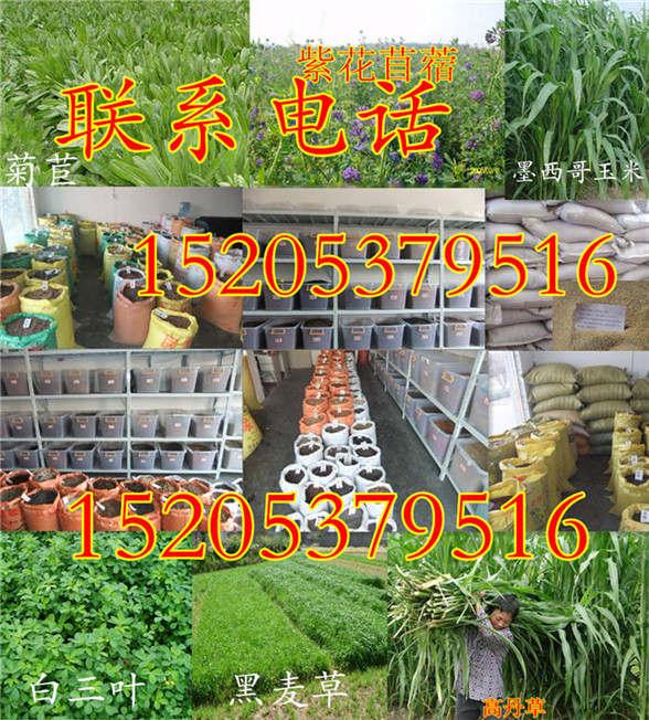 江苏省淮安市护坡草种子要怎么种