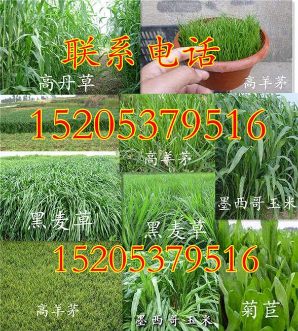 贵州省铜仁市护坡草怎么播种