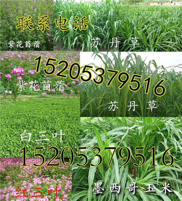 上海省静安区护坡草种有几个品种
