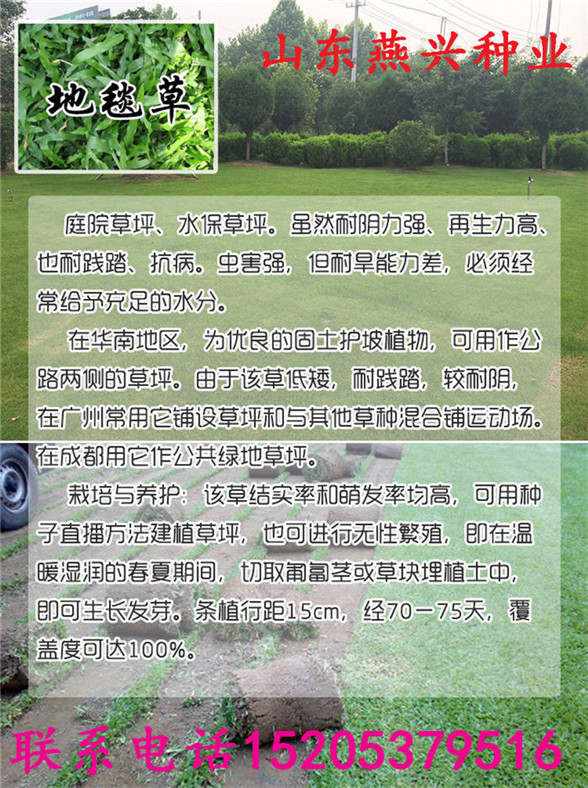 黑龙江省鸡西市高羊茅种子多少钱斤