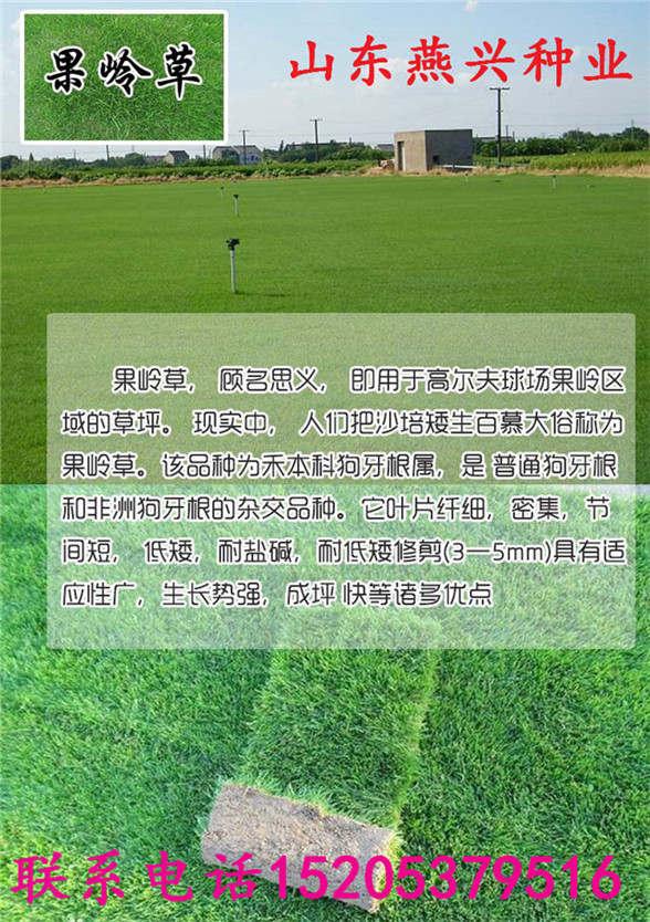 海南省白沙县高羊茅早熟禾黑麦草