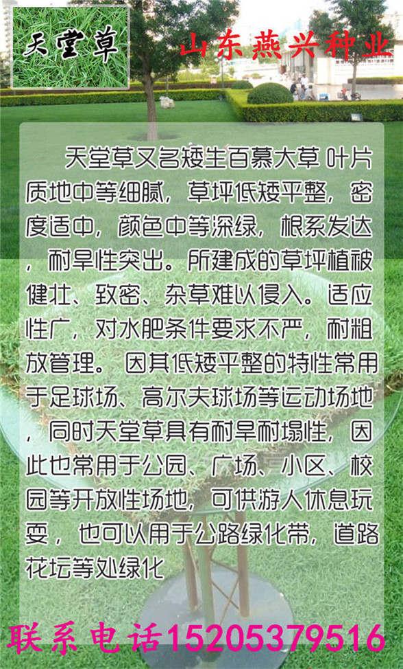 上海省长宁区公路护坡草坪如何种植