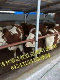 今年繁殖母牛价格