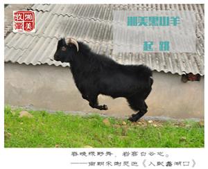 湘美黑山羊的宗旨:绿色、安全、健康、创新