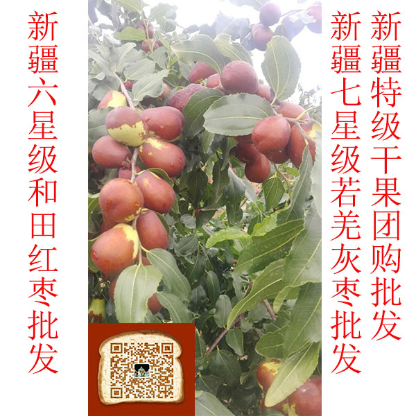 东莞市新疆特产红枣六星和田特级骏枣原料正宗营养丰富
