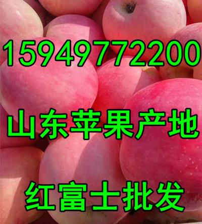 山东苹果批发冷库红富士苹果降价供应