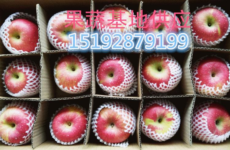 梁山双矮苹果基地新红星苹果价格
