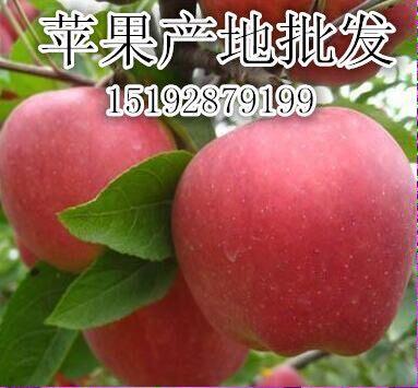 苹果基地是哪河北新红星苹果价格