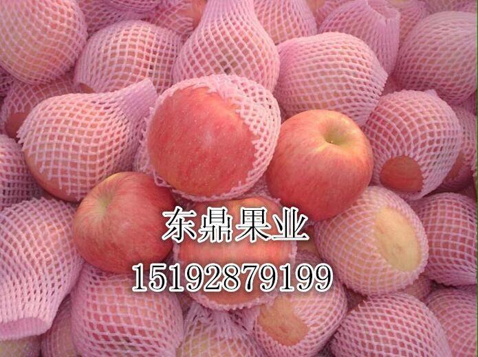 苹果产地哪里好玩陕西红星苹果产地代办