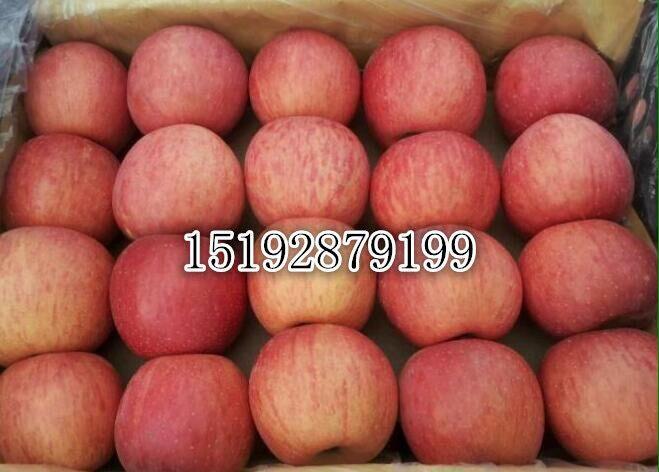 崇州市嘎苹果