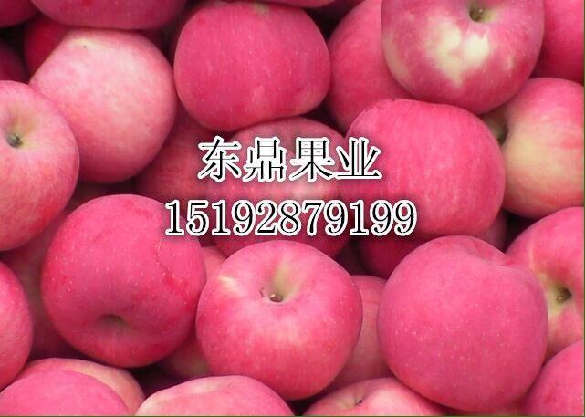 栖霞苹果价格趋势山东纸袋红星苹果