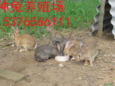仙桃市加盟养殖杂交野兔怎么样、赚钱吗