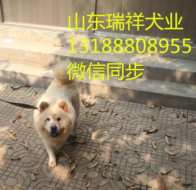 哈士奇犬价格、阿拉斯加犬养殖场、松狮幼犬多少钱一只
