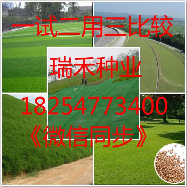 江西萍乡市休闲草坪种子草种的选择