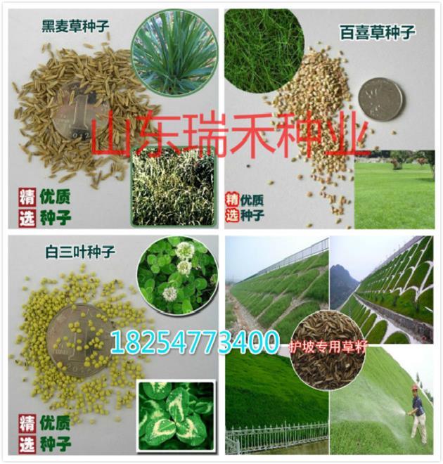 江西九江市常用草坪种子种类