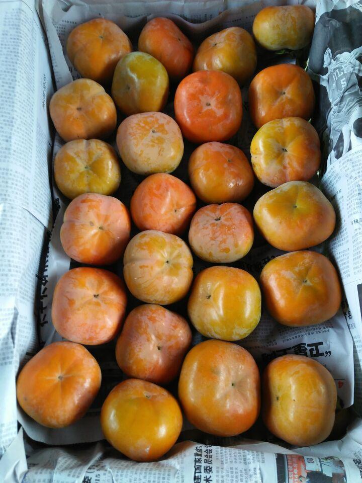 陕西2017九月黄柿子产地、水果甜柿子基地批发