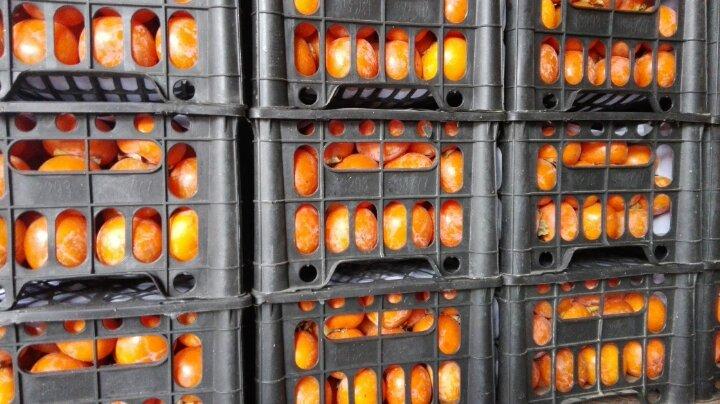 东莞水果批发市场柿子