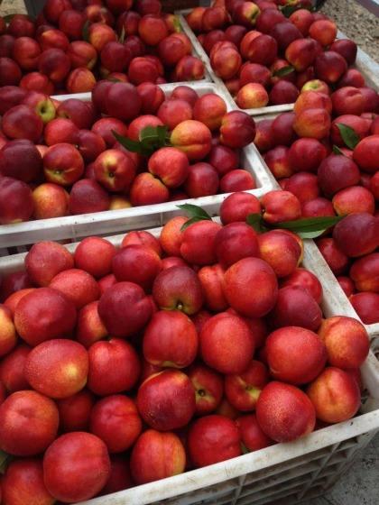 去哪里找油桃批发市场