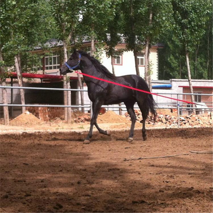 伊犁马多少钱 景区专用马  拉车马 蒙古马  三河马 纯种设特兰矮马