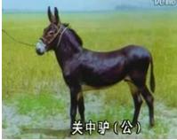 供应肉驴 种驴 驴驹 公驴 母驴