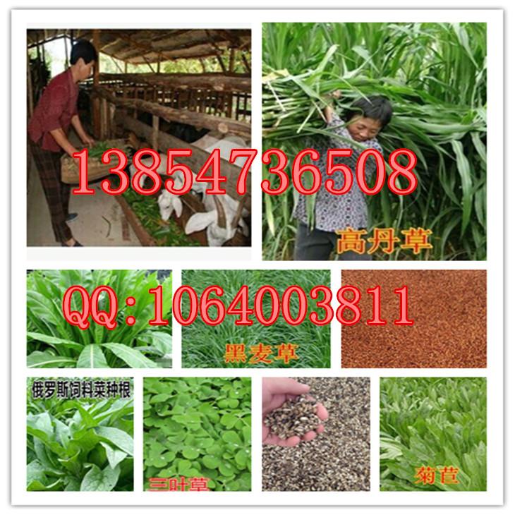 优乐国际娱乐平台省海淀区哪里有卖暖季型草坪种子