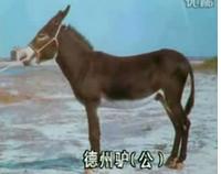 现在驴苗价格是多少 养一头肉驴能赚多少钱-养殖