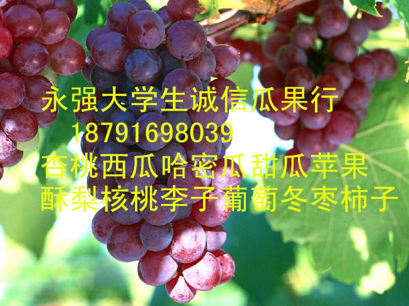 陕西早熟红提葡萄批发陕西兴华红太阳葡萄批发陕西红提葡萄产地行情
