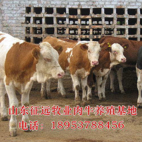 睢宁县哪里有大型优乐国际娱乐老虎机犊养殖场