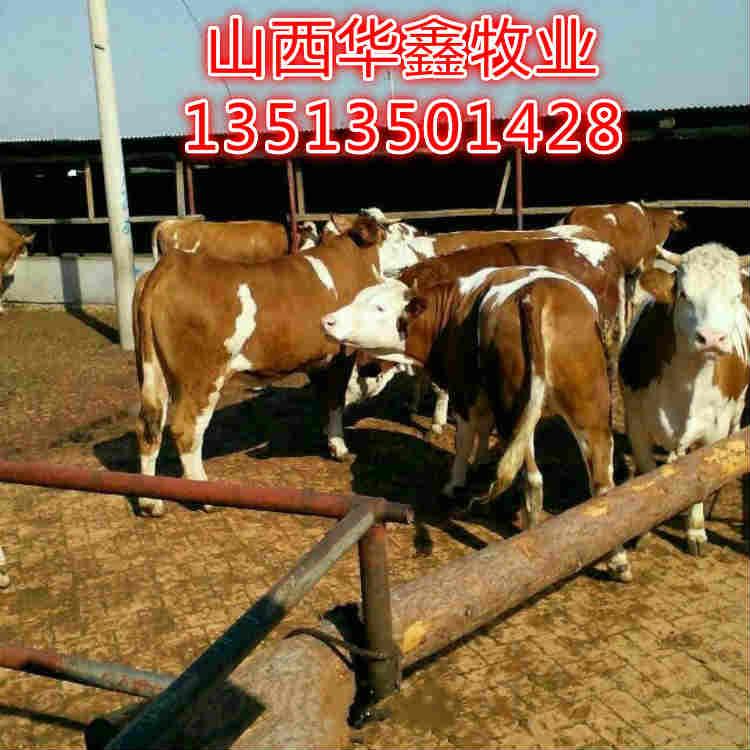 海林肉牛种牛买牛有补贴