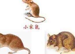 城市工业鼠消灭 连锁超市灭鼠