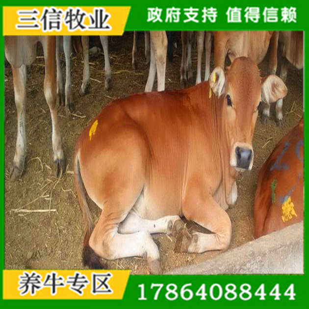 大同青山羊养殖场