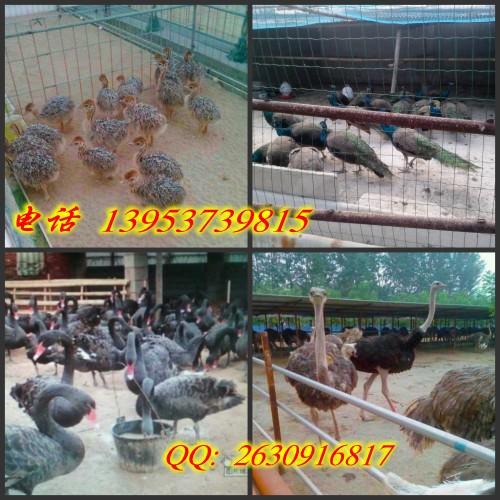 河南鹤壁市山城区哪里有卖骑乘骆驼珍禽养殖基地