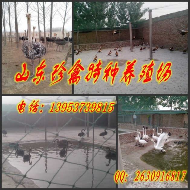 养殖骑乘骆驼的效益怎样青海海北藏族自治州祁连县骑乘骆驼利来国际登录